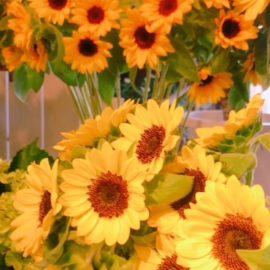 元気をもらえるヒマワリの花