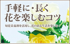 手軽に・長く 花を楽しむコツ